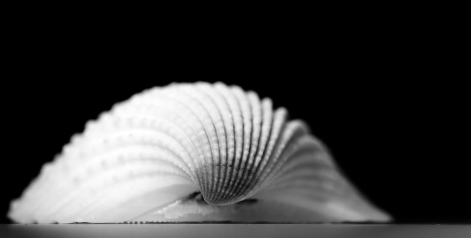 Black and white macro photography
