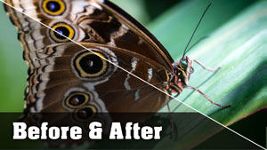 Butterfly Photo - Before and After Tutorial