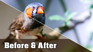 Finch Photo - Before and After Tutorial